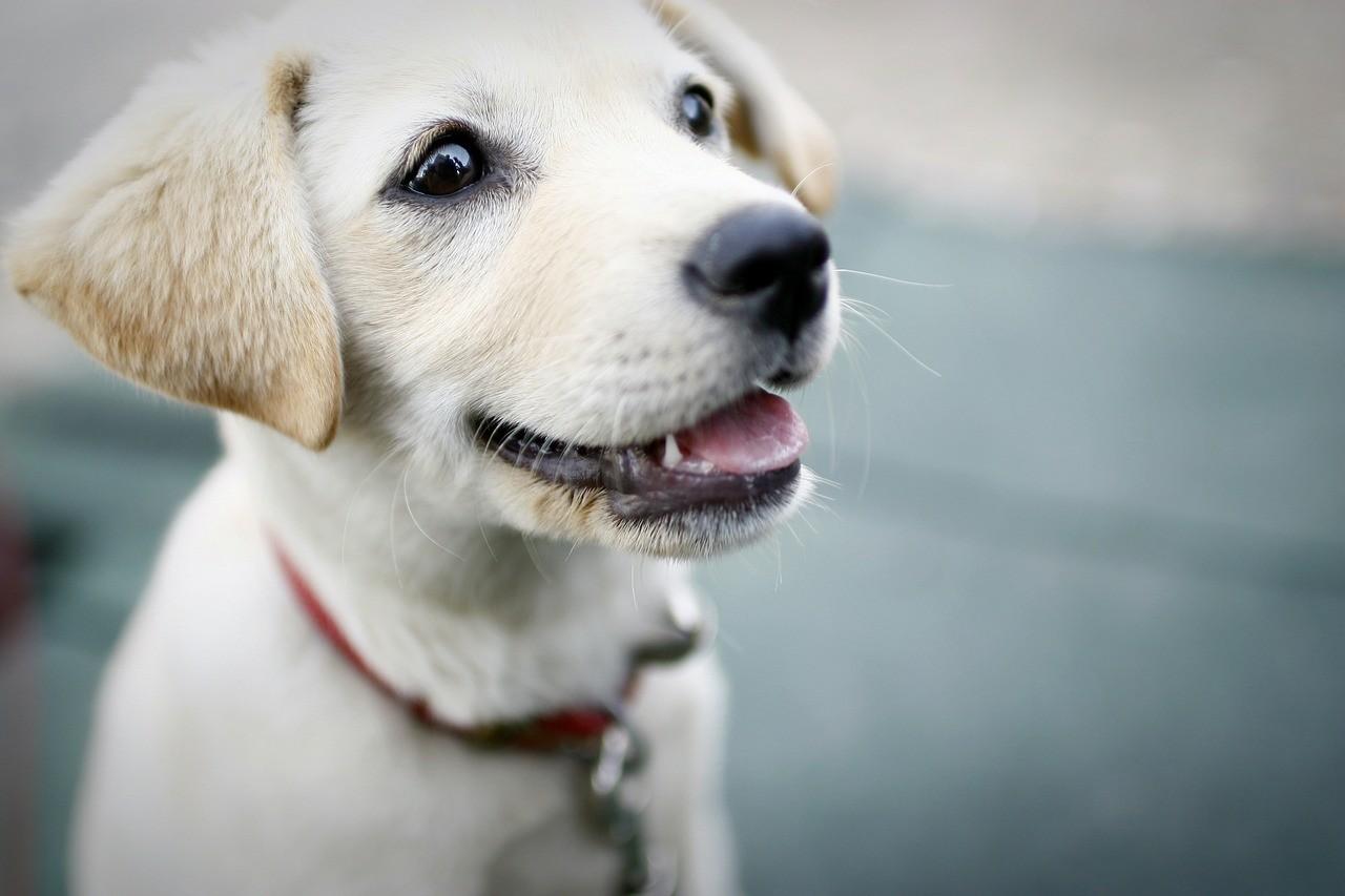 Love Dogs Quotes Wallpaper : Grochow: Trutka na trawniku dwa psy juz nie zyj? Warszawa W PiguLce