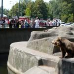 Znaleziono ciało mężczyzny w toi toiach przy wybiegu dla niedźwiedzi