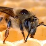 Ukradł… ul z pszczołami w środku