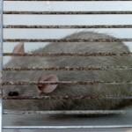 Szczur na placu zabaw. Rodzice zawiadomili Eko Patrol