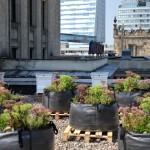 Pasieka na… dachu Pałacu Kultury i Nauki