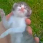 """Finał sprawy drastycznego filmu z egzekucji kotka. Fałszywe profile i próba wrobienia """"kolegów"""""""