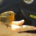 Pomagaj zwierzętom, ale mądrze. Specjaliści apelują – nie porywaj młodych ptaków!