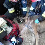 Strażacy uratowali psa i kota z pożaru mieszkania przy ul. Heleny Junkiewicz. Zobacz zdjęcia z akcji