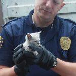 Wspólna akcja warszawiaka, Straży Miejskiej i MPWiK – ratowali małego kotka