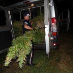 Plantacja marihuany na działce męża Hanny Gronkiewicz-Waltz. Policja zatrzymała dwie osoby