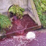 Tysiące litrów ścieków z krwią trafiło do Wisły [WIDEO]