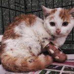 Poparzony 3-miesięczny kotek prosi o dom!!!